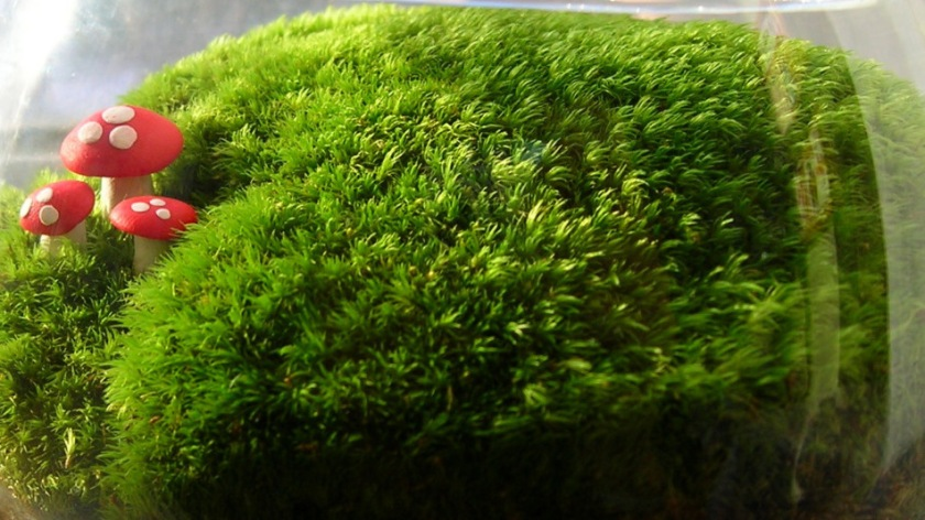 yosun-mantarli