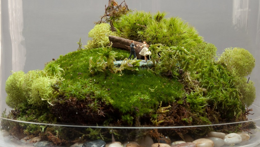 Perfect Terrarium
