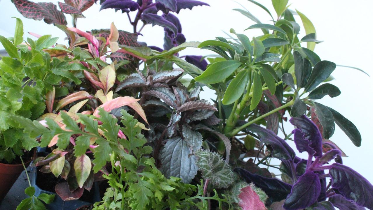 Popular Terrarium Plants